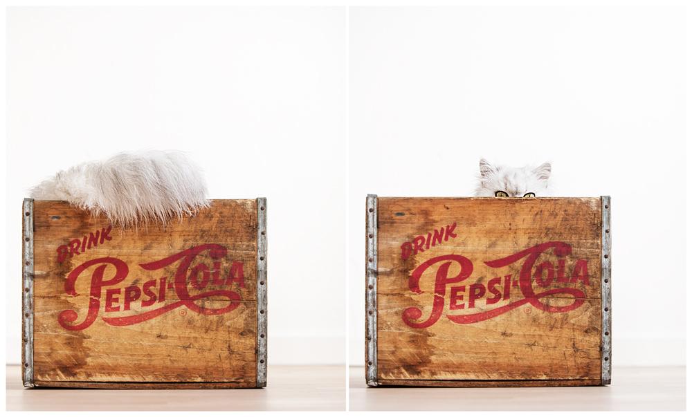 Herr Zotti in Pepsi-Kiste